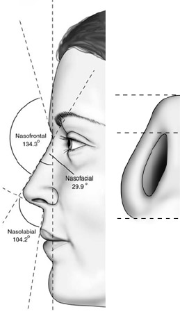 Lateral and basal views of the average North American white woman.